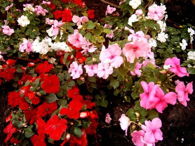Flores de Abril P4180034