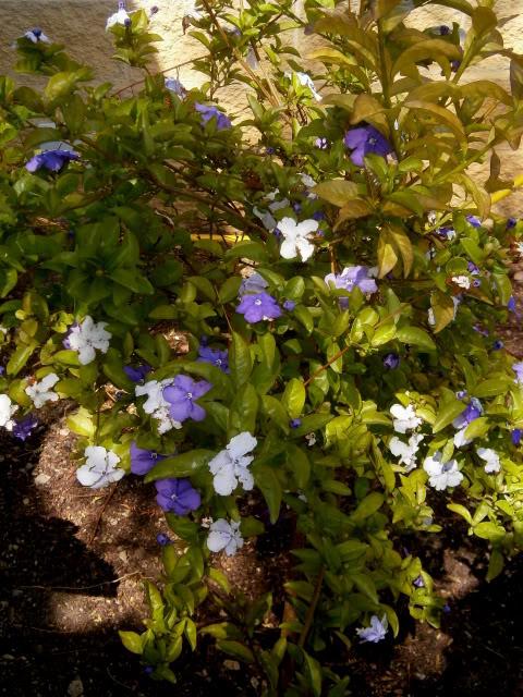 Arbustos. P4030015