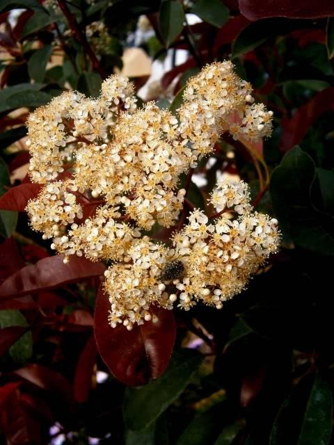 Flores de Abril P4130007