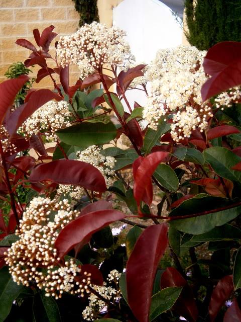 Arbustos. P4130008