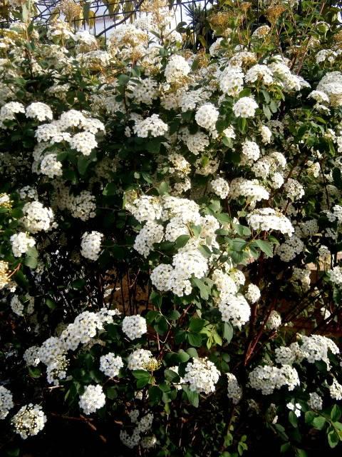 Arbustos. P4130013