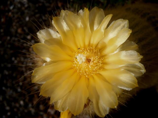 Cactus. P4180033