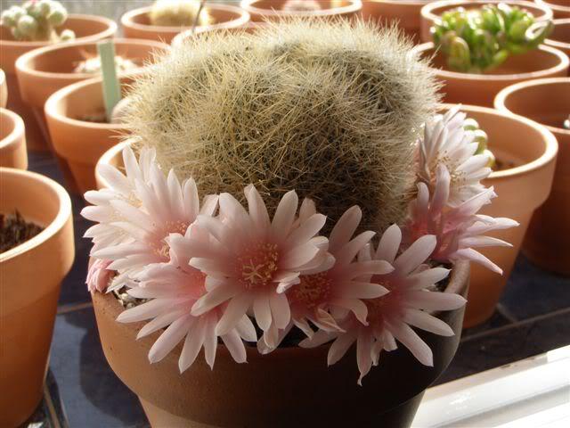 Cactus. P3230046