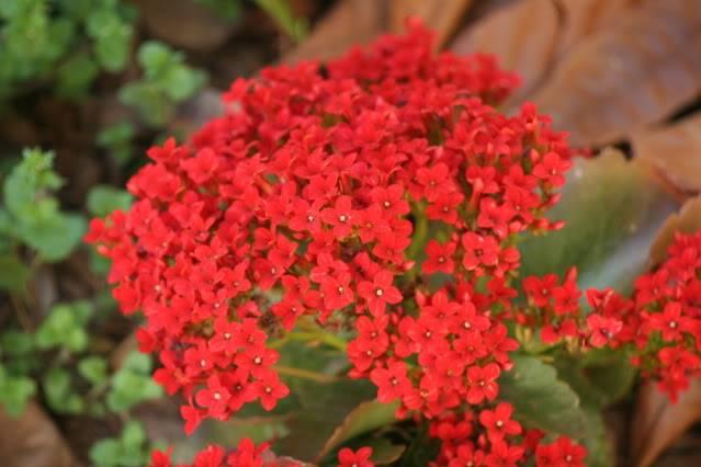 Flores de Abril IMG_3883