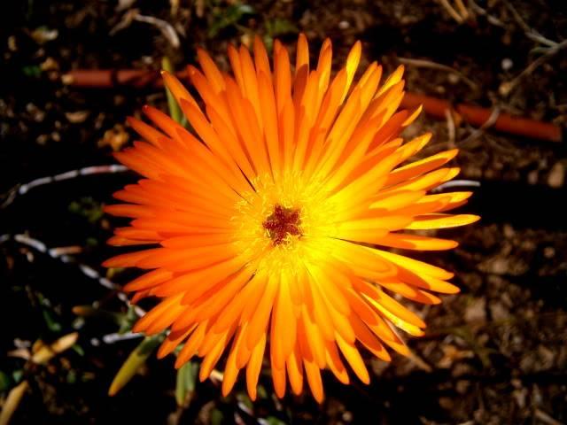 Flores de Abril P3160011