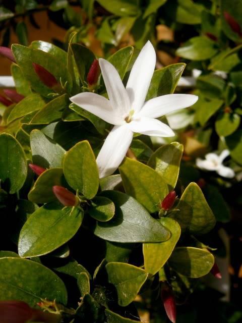 Flores de Abril P4180040