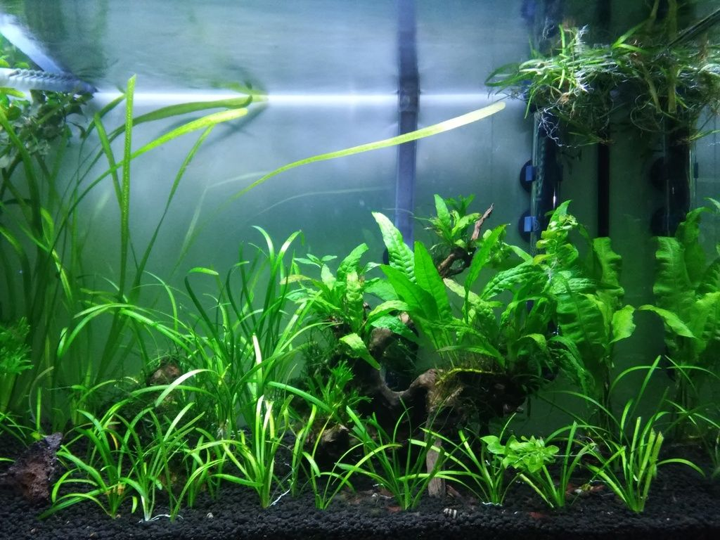 Wild Shrimp Aqua - Página 2 F3_zpsksmmboh7