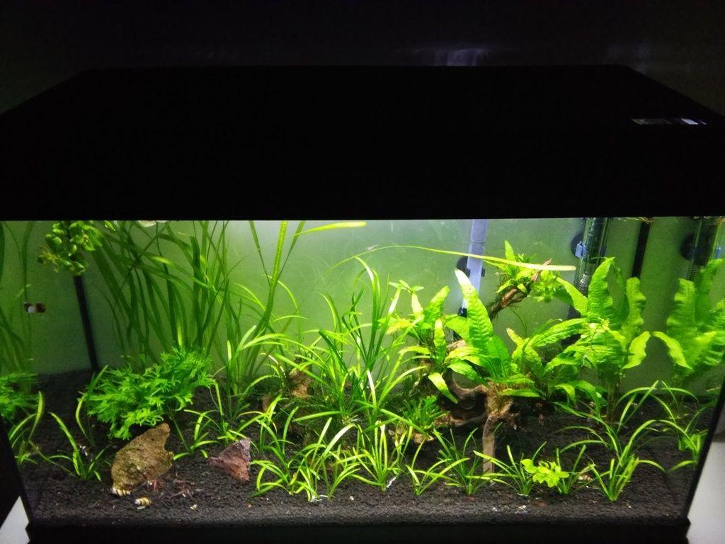Wild Shrimp Aqua - Página 2 F4_zps9nq59wri