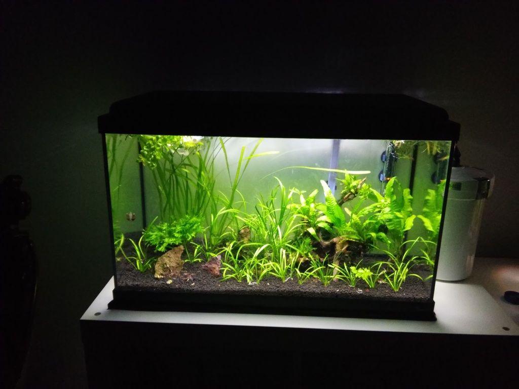 Wild Shrimp Aqua - Página 2 F5_zps241i9wf3