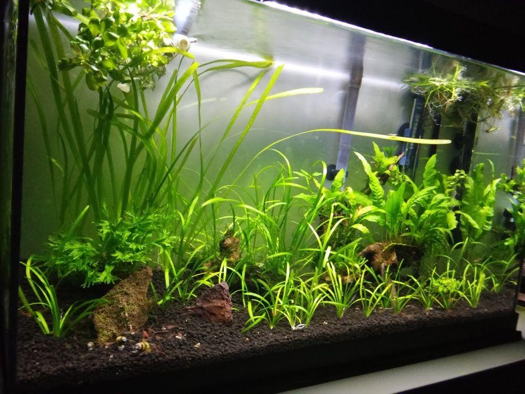 Wild Shrimp Aqua - Página 2 F6_zpsgpzxprzt