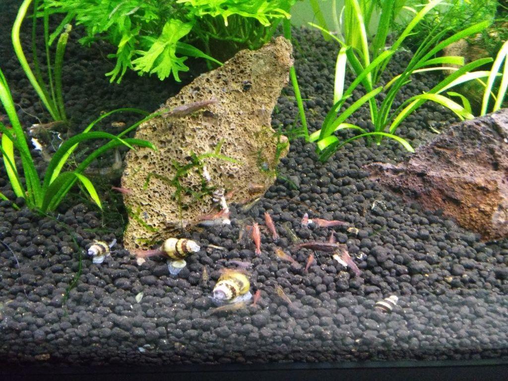 Wild Shrimp Aqua - Página 2 F7_zpsupg3yvvt