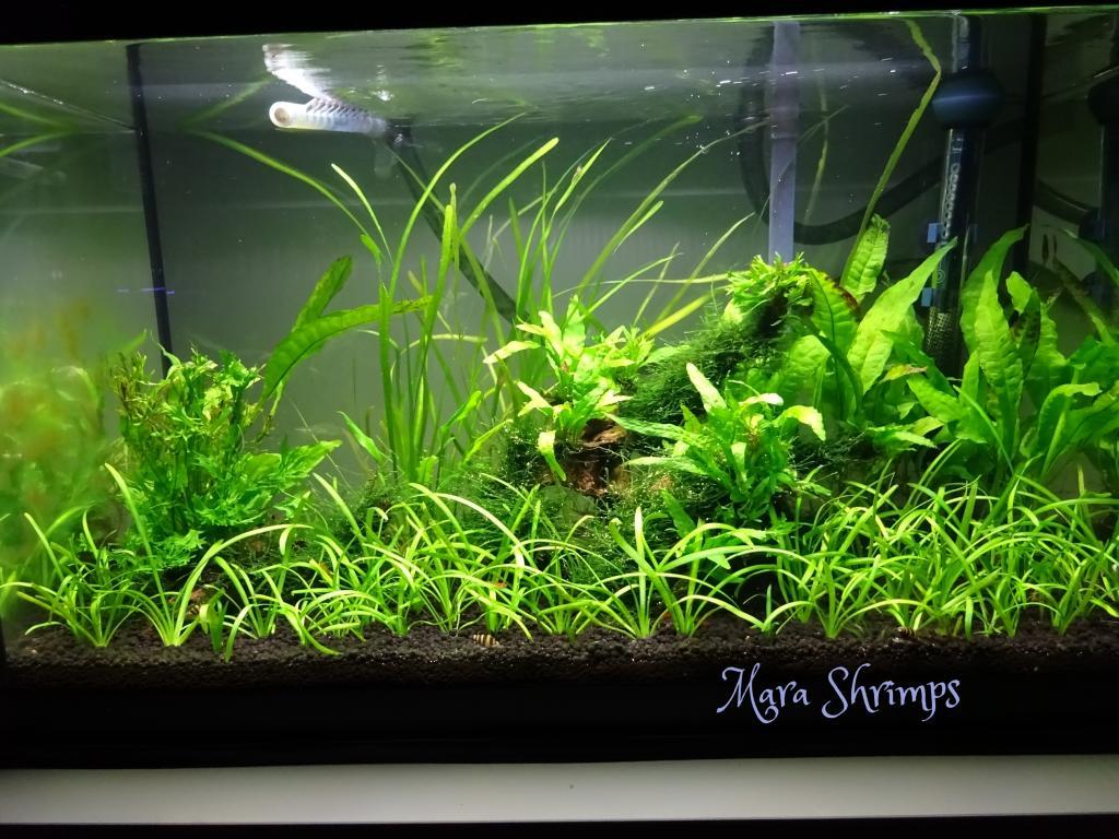 Wild Shrimp Aqua F7ff12fa-b126-4045-a623-61c89c40276a_zps859f0cdc