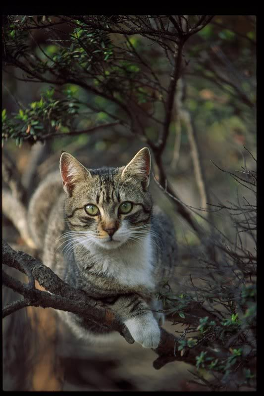 Hidden Secrets,Death clan Warrior cats arise from the shadows.... MalteseCat_148