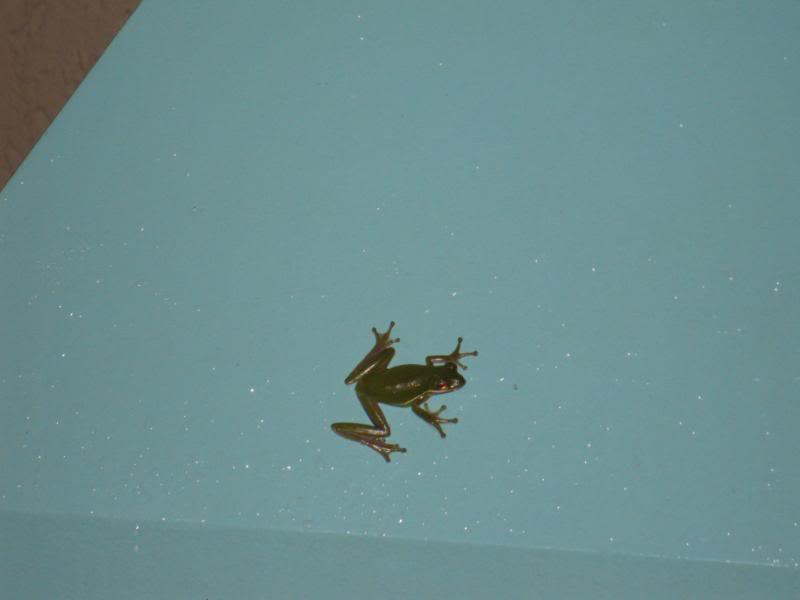 Critters of Coronado Disney205