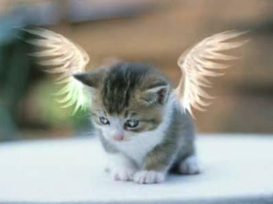 - BBoy_KMKC Cat-angel