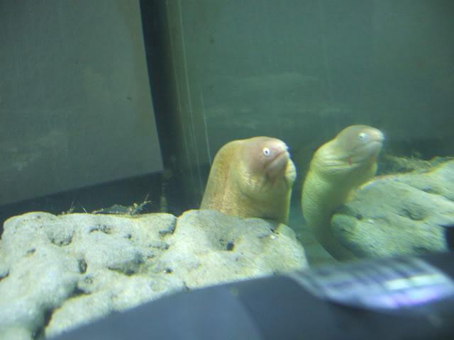 quel est le plus gros poisson que tu ais vu de tes yeux? DSCF0863