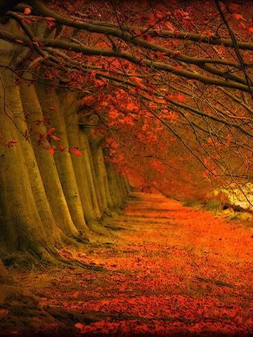 Trees (2) Trees_01
