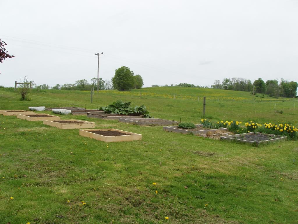Northeast PA Sq. Ft. Gardener here! P1010421