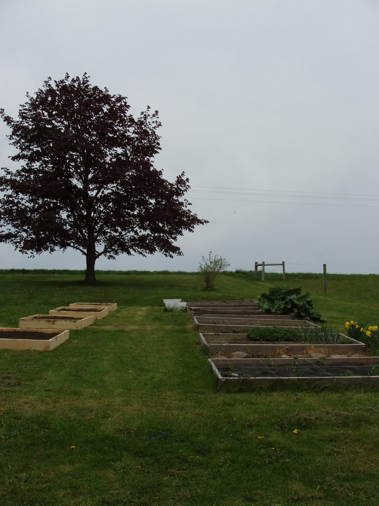 Northeast PA Sq. Ft. Gardener here! P1010422