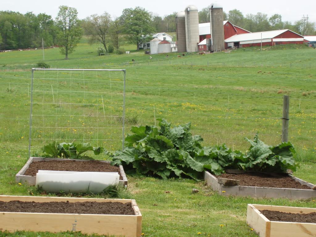 Northeast PA Sq. Ft. Gardener here! P1010426