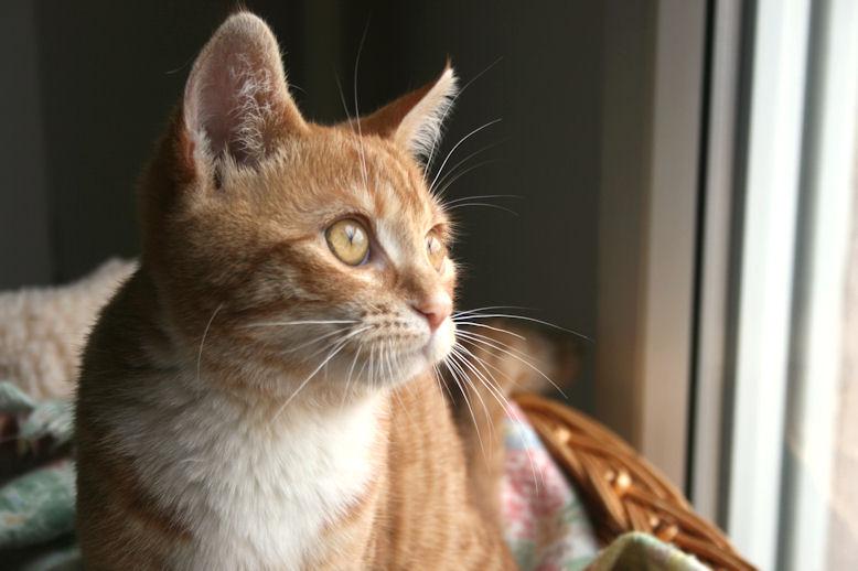 Perle, Chaton femelle, rousse, née le 20 mai 2011 281011_4