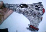 Vaisseau Wraith : le Dart Th_DSC05400