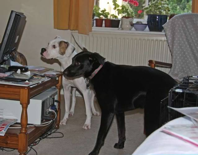 Zoe - NRBR *Rehomed* Sw-With-Fred