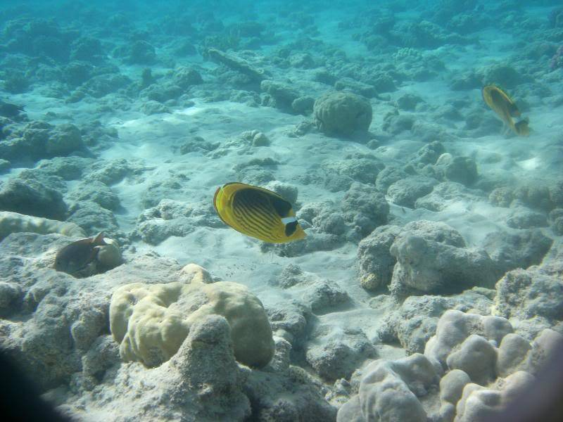 Pics of the wildlife and fish of egypt Picture047