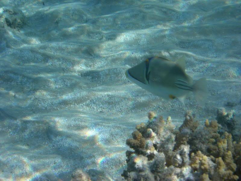 Pics of the wildlife and fish of egypt Picture073