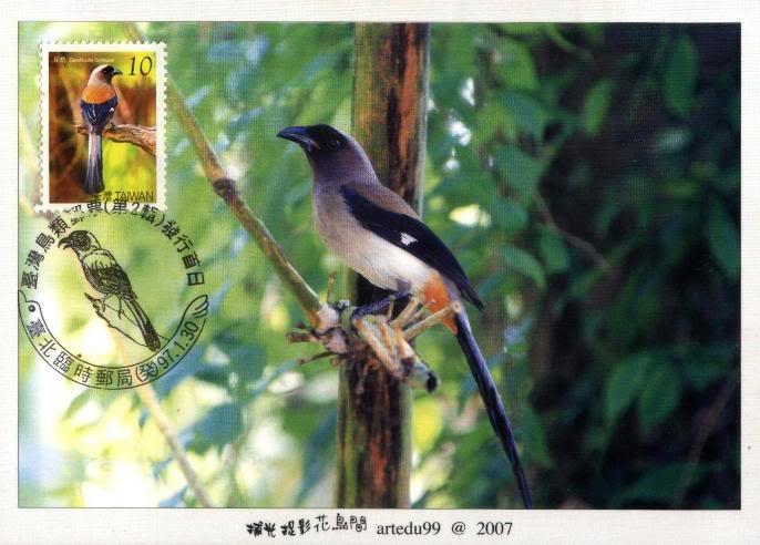 Vögel - Seite 2 TWN_20080130_MC03B