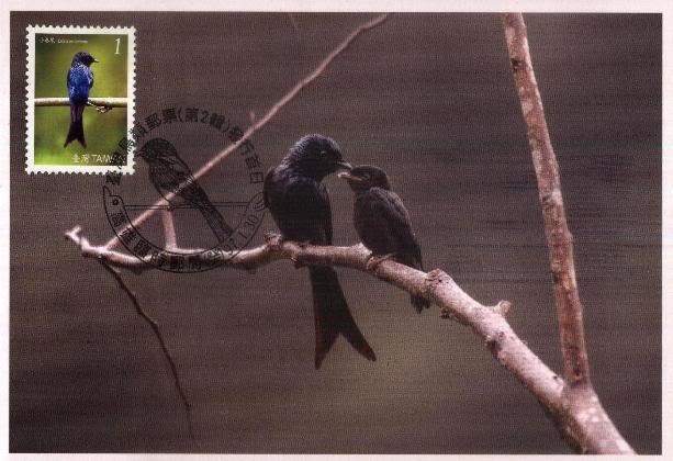 Vögel - Seite 2 TWN_20080130_MC04A