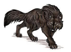 »Wolf Club Wolf