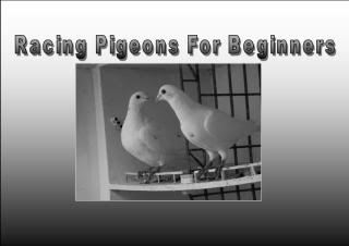 Free forum : The Pigeon Hole.com - Portal Begbanner
