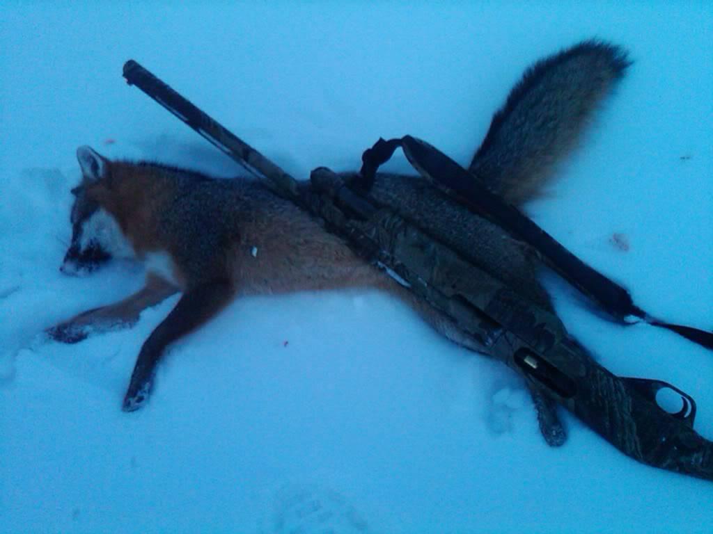 Gray fox down....... IMG00331-20110120-1732