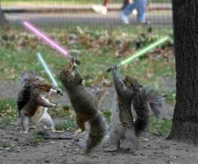 Funny pics Squirrels6se
