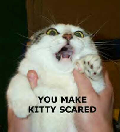 Funny pics You20make20kitty20scared