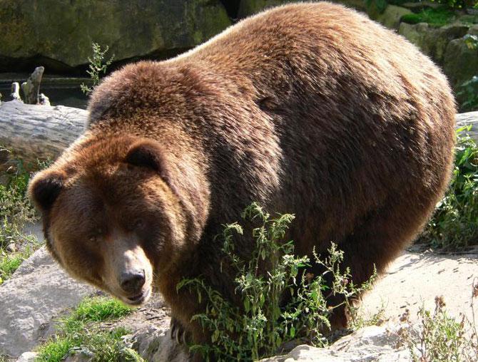 Встреча с медведем Ca951a9512312f227cd7bb3586245ab7