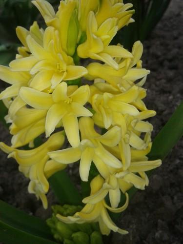 И у цветов весна)) B3899b760e96a4d448c78cbcf3346fd8