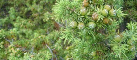 Flora i Fauna Copyofsmreka