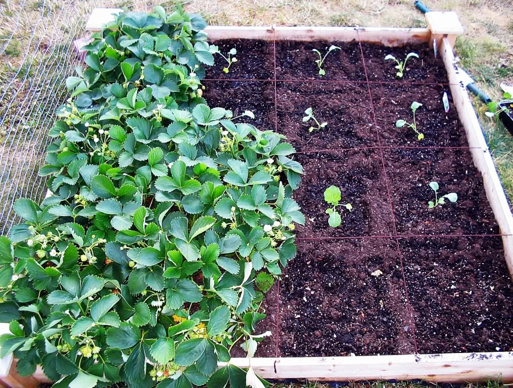 My First SQF Garden! - Page 2 001-6