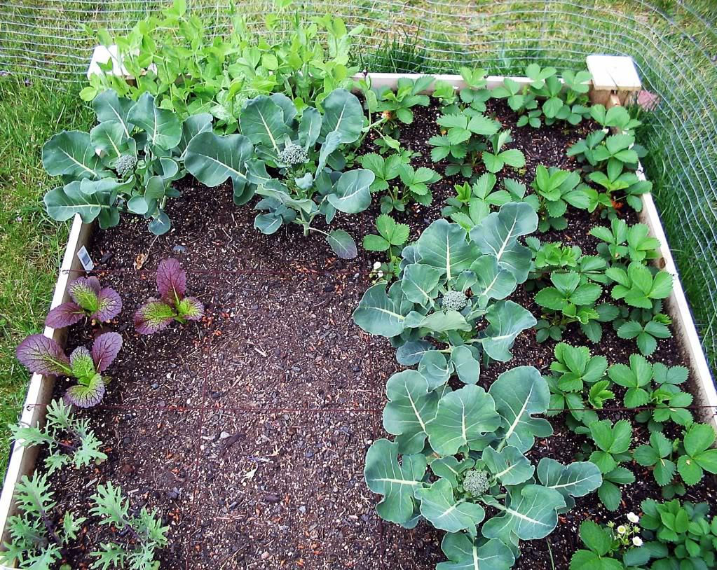 My First SQF Garden! 002-3