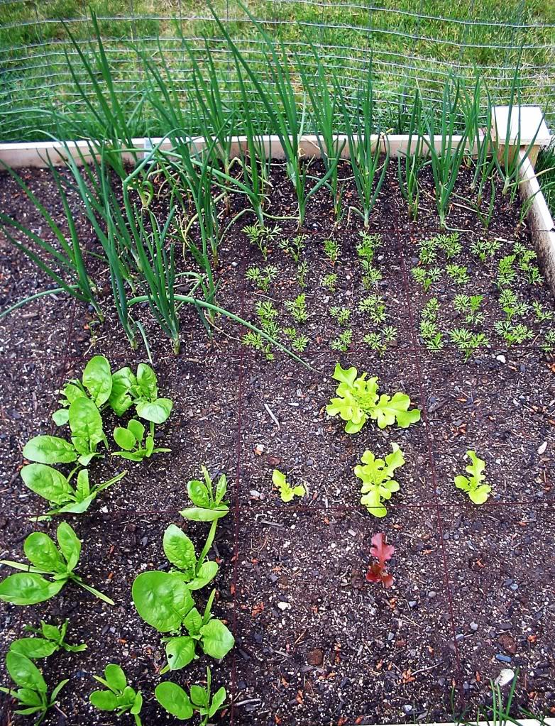 My First SQF Garden! 003-3
