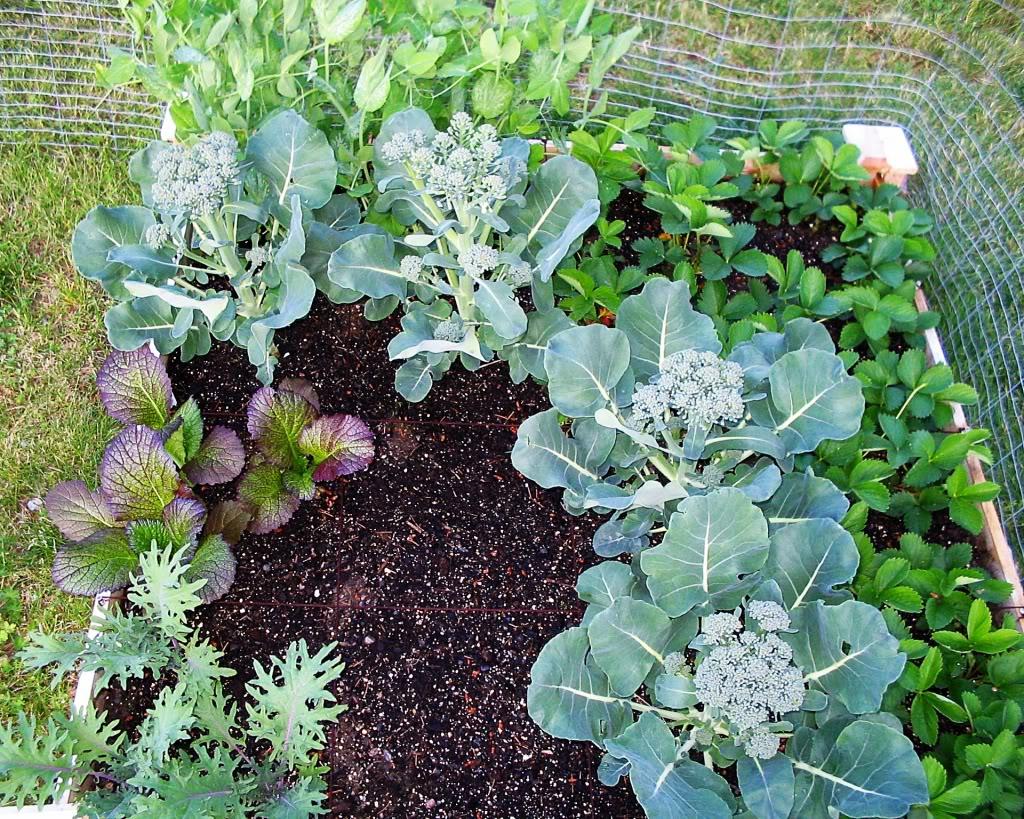 My First SQF Garden! 003-4