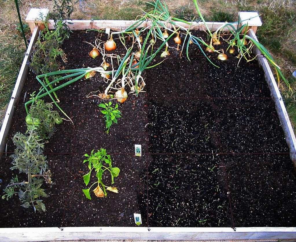 My First SQF Garden! - Page 2 003-6
