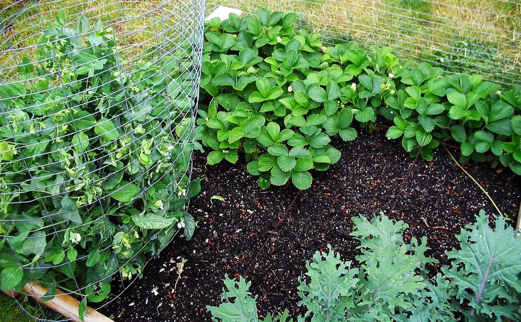 My First SQF Garden! 008-2