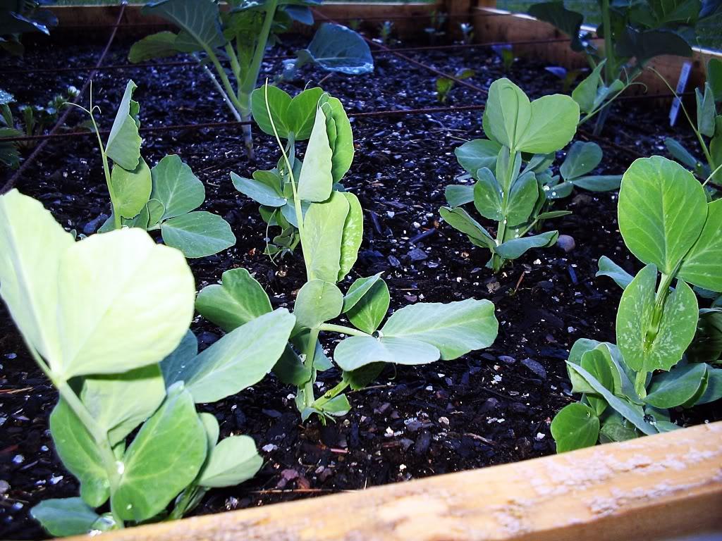 My First SQF Garden! 013