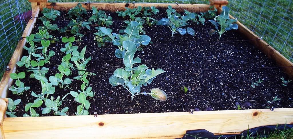 My First SQF Garden! 017