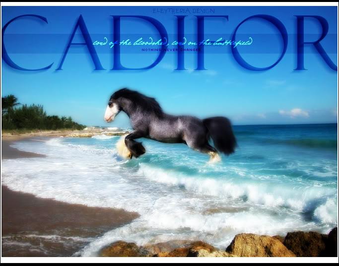 Cadifor Cadiforv1sig