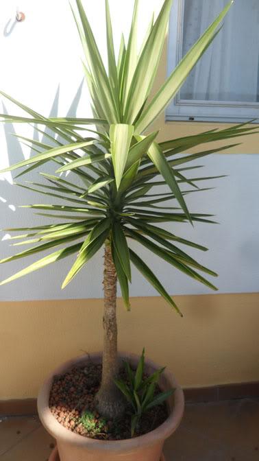 Plantas para principiantes Planta3