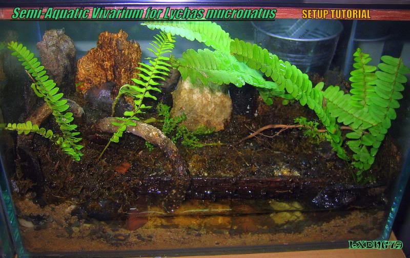 [HOW TO] Lychas mucronatus' Semi-Aquatic Communal Enclosure  LmAq